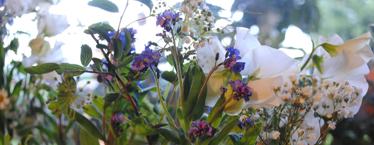 Slider Bild für Angebot - Blumen Bergmann Bolligen
