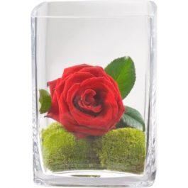 Herzklopfen in Vase - Valentinstag Geschenk - Blumen Bergmann
