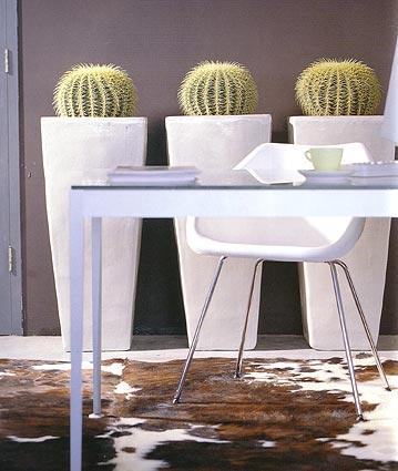 indoor-begruenung-kaktus-blumen-bergmann
