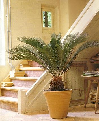 indoor-begruenung-palme-blumen-bergmann