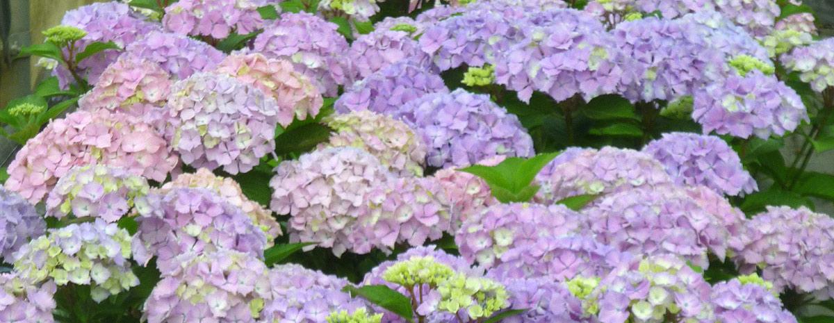 Newsletter - Blumen Bergmann Bolligen