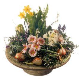 Zarte Kostbarkeiten gepflanzt - Blumen Bergmann