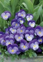 Fühlingsgefühle 4 - Blumen Bergmann Bolligen
