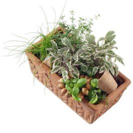 Kräuterkistli - Blumen Bergmann