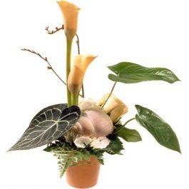 Exotische Eleganz - Blumen Bergmann