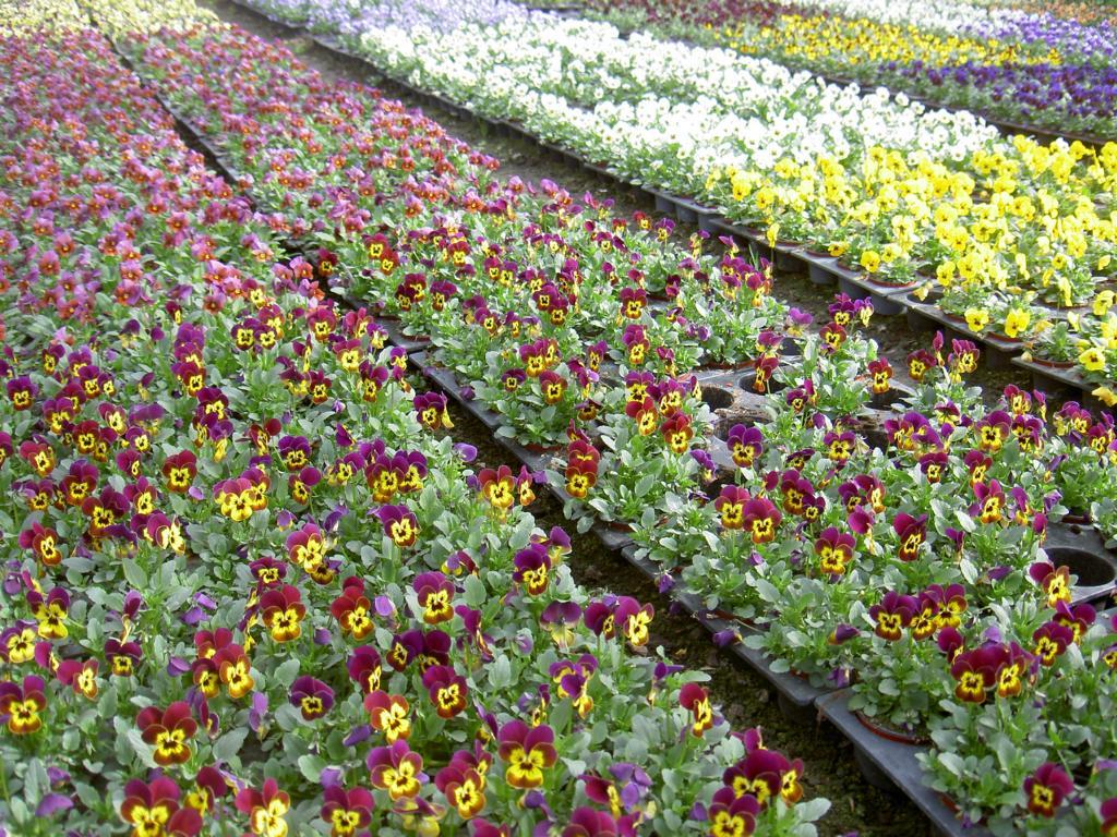Gärtnerei Blumen Bergmann