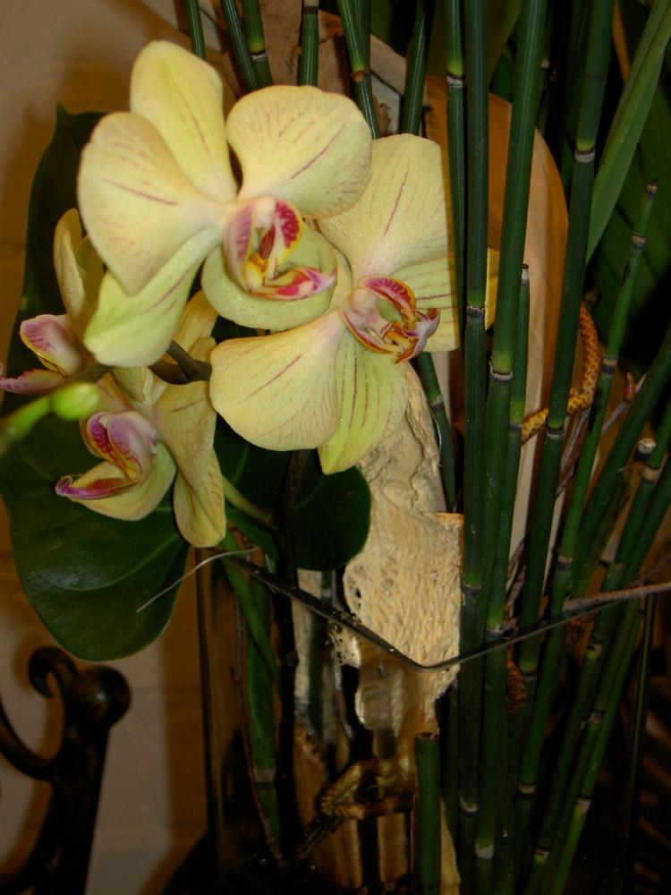 orchideen-blumen-bergmann